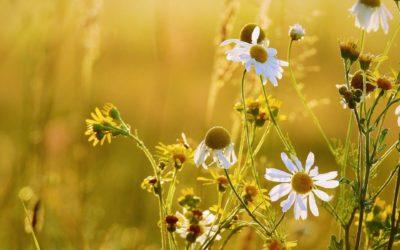Virginia Guillon – La maladie rare crée de belles personnes