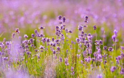 Violette Duval – Le voyage d'une vie… Avec la Fibromyalgie !